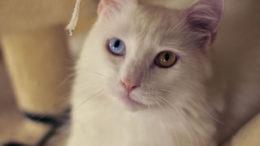 kittywm2